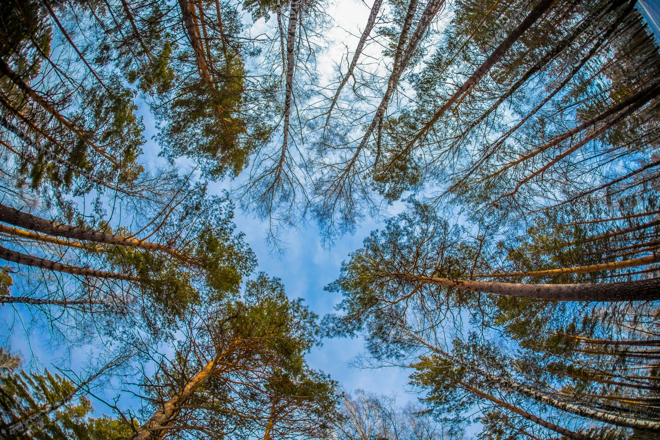 Importance of Trees Fight Climate Change