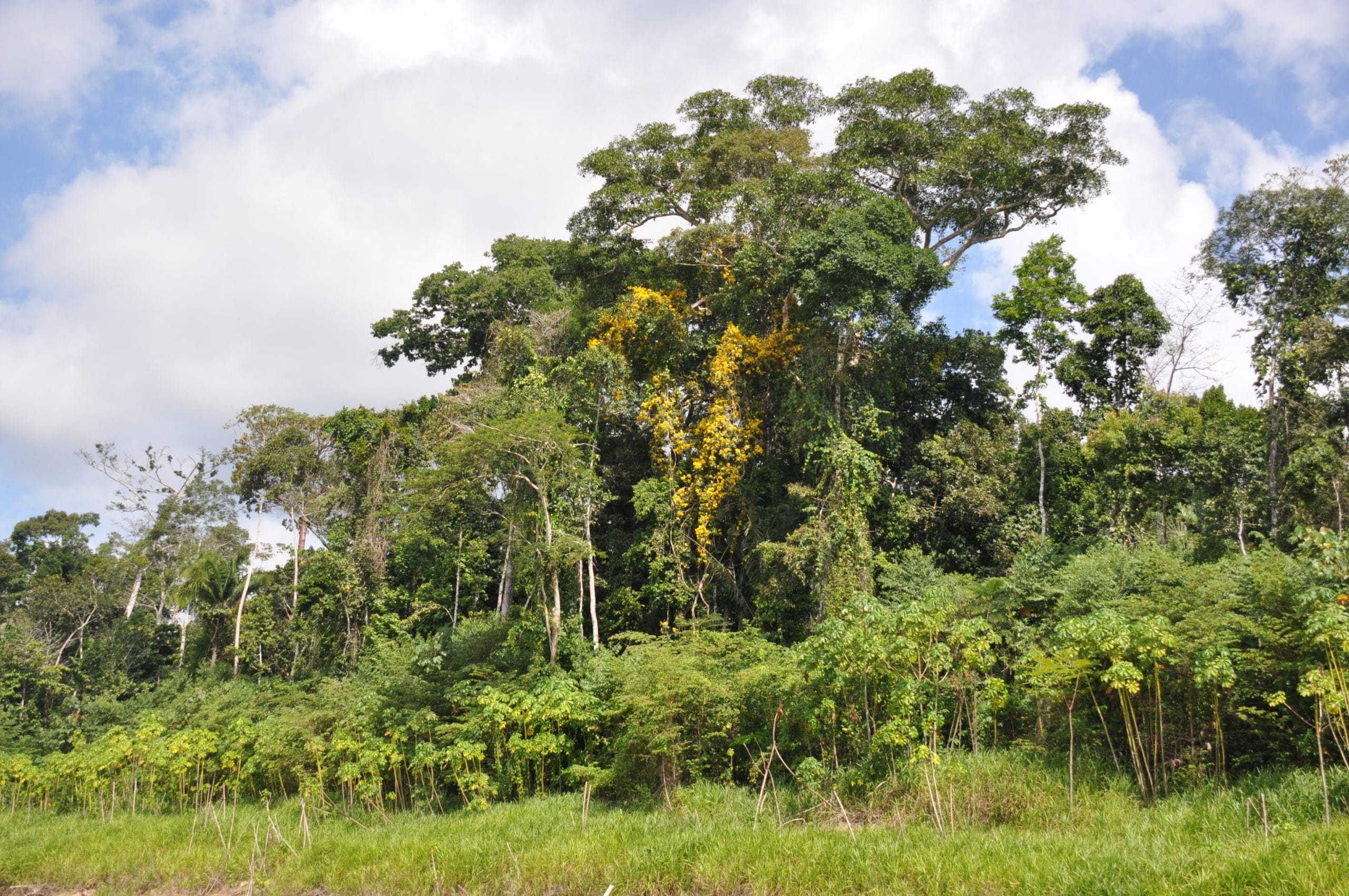 Carbonfund.org Success Story - Helping to Save the Amazonian Rainforest